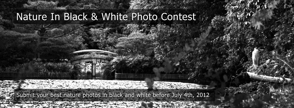Nature In Black & White Photo Contest