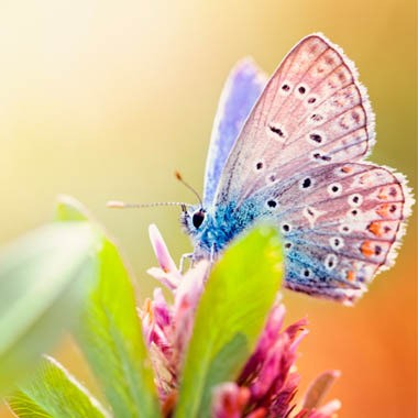 Butterfly Photo Contest