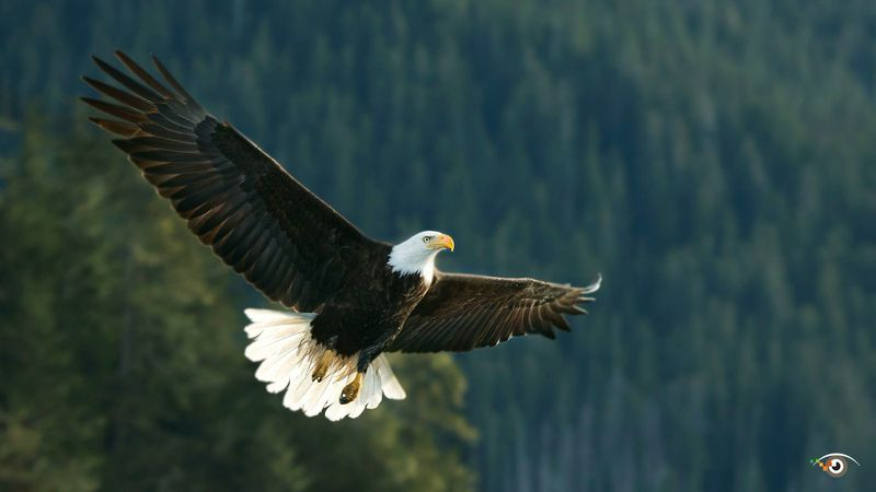 7 Tips on how to improve your birds in flight photography by Rick Sammon