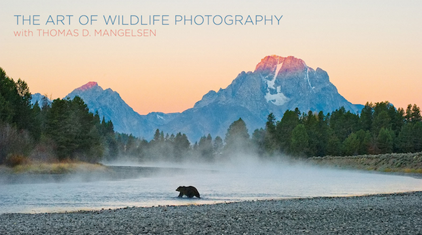 The Art of Wildlife Photography Photo Contest